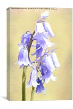 Bluebells on Cream, Canvas Print