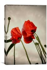 Poppies In The Sky, Canvas Print