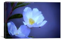 Delicate Flower on Blue, Canvas Print