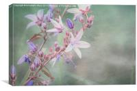 Lilac Looking Glass Flower, Canvas Print