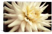Dahlia Delight., Canvas Print