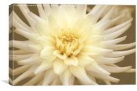 A Dahlia Cream, Canvas Print