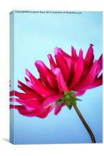 The Dahlia Sky., Canvas Print