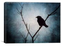 Jackdaw on Grey., Canvas Print