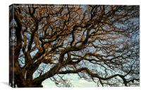 Twisted Winter Tree., Canvas Print