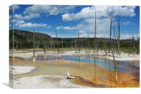 Dry trees in thermal waters, Yellowstone, Canvas Print