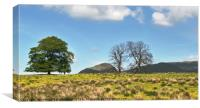 West Highland Way - Dumgoyne, Canvas Print