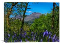 Ben Lomond through the bluebells on Inchcailloch, Canvas Print
