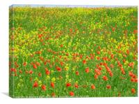 Close up of the machair, North Uist, Canvas Print
