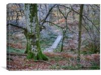 Walking through the forest on Inch Cailloch, Canvas Print