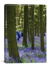 Playing in Bluebell Woods, Canvas Print