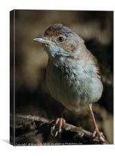Whitethroat , Canvas Print