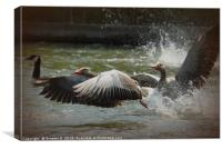 White Fronted Geese, Canvas Print