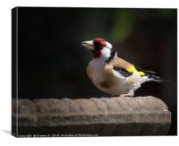 Goldfinch , Canvas Print