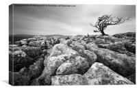 Yorkshire Dales Tree, Canvas Print