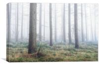 Misty Wood - North York Moors, Canvas Print