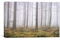 Misty Wood, Canvas Print