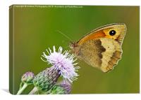 Meadow Brown - Maniola jurtina, Canvas Print