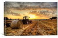Tractor Harvesting Sunset, Canvas Print