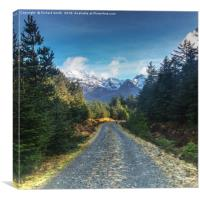 Walking the Bealach Brittle forest loop track #1, Canvas Print