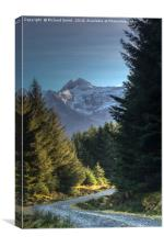 Walking the Bealach Brittle forest loop track #3, Canvas Print