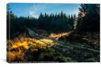 A shaft of sunlight falls across a forestry road, Canvas Print