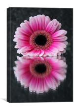 Gerbera - Reflections of Beauty, Canvas Print