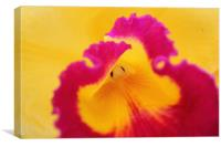 Brightly coloured Orchid flower, Canvas Print