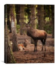 Stag and Hind In The Woods, Canvas Print