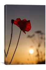 Among the Poppies, Canvas Print