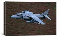 Harrier low level, Canvas Print