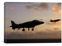 Sea Harriers Hovering , Canvas Print