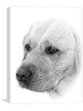 award winning Lab image in pencil by JCstudios 201, Canvas Print