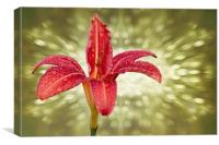 Wet Day lily...as seen on ITV Meridian, Canvas Print
