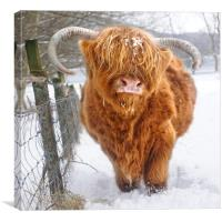 Just cos it's Coosday....., Canvas Print
