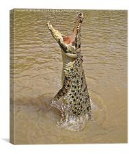 Queensland Wild Crocodile., Canvas Print