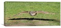 Eagle Owl coming in for the kill, Canvas Print