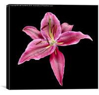 Single Lily , Canvas Print