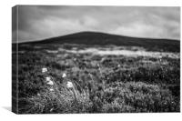 ...from Bog to Summit, Canvas Print