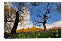 Magical Bluebell Wood, Canvas Print