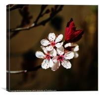 Springing Back To Life, Canvas Print