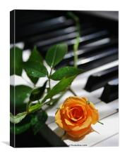 Rose Struck A Chord, Canvas Print