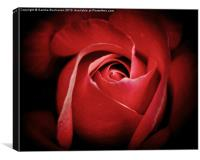 Dreamy Rose, Canvas Print