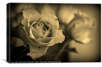 Roses in Sepia, Canvas Print