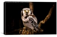 The Great Horned Owl, Canvas Print