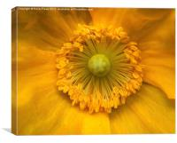 Macro Poppy, Canvas Print