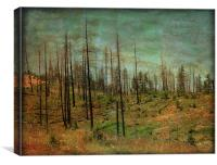 Burnt Forest, Canvas Print