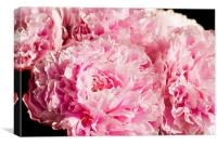 Pink Peony Bouquet, Canvas Print