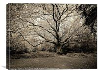 The Old Oak Reaching Out, Canvas Print