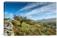 Lone tree in the Lake District, Canvas Print